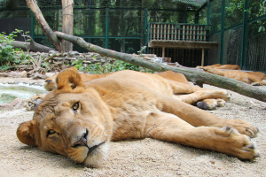Five sisters zoo appeal listing